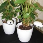 Wi-Fi Plant Sensor – датчик который следит за домашними растениями и помогает за ними ухаживать