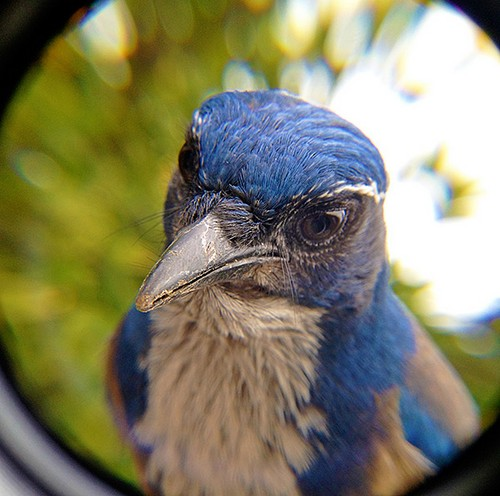 Bird Photo Booth1