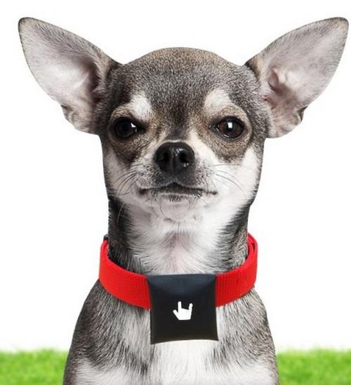BeLuvv  Puppy