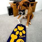 Первый в мире пульт дистанционного управления для собак